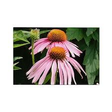 Purple Echinaceae Rectangle Magnet