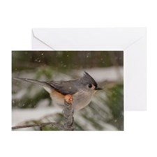 Snowy Tufted Titmouse Greeting Cards