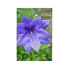 Blue Macro Flower Rectangle Magnet