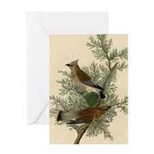 Audubon Cedar Waxwing Bird Greeting Cards