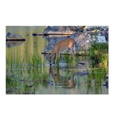 Yearling Buck Postcards (Package of 8)