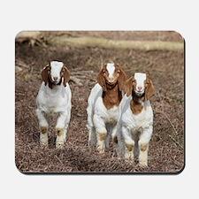 Smiling goats Mousepad