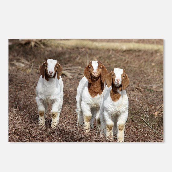Smiling goats Postcards (Package of 8)