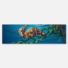 Seahorse Standoff Sticker (Bumper)