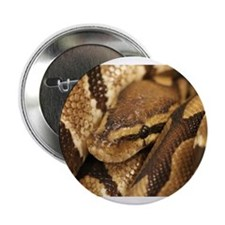 "Ball Python 2.25"" Button"