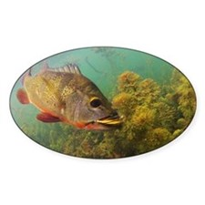 Peacock Bass on the Fly Decal