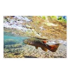 Brown Trout Postcards (Package of 8)