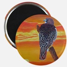 Red Tailed Hawk Magnets