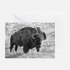 Buffalo Chew Greeting Cards (6)