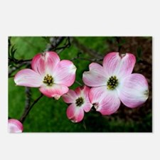 Dogwood Flower Postcards (Package of 8)