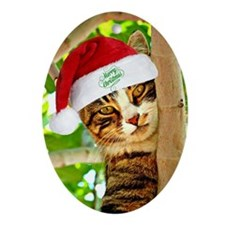 Christmas tabby cat in a tree Oval Ornament