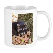 Raccoon Up Close Mugs