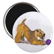 Soft Coated Wheaten Terrier with Ball Magnets