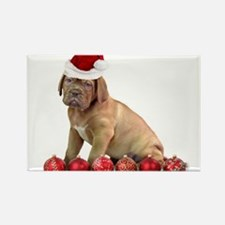 Christmas Dogue de Bordeaux puppy Magnets