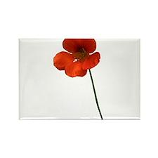 Orange Flower Magnets