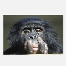 Chimpanzee004 Postcards (Package of 8)