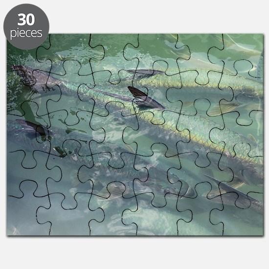 Tarpon Madness Puzzle