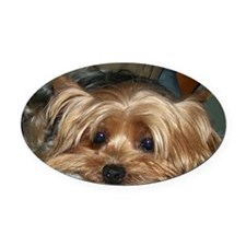 Cute Yorkie Oval Car Magnet