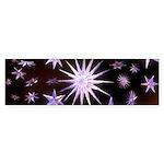 Sparkling Stars Sticker (Bumper 10 pk)