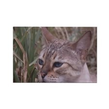 Funny Tabby cat Rectangle Magnet
