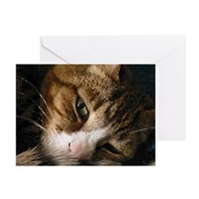 Cute Cats curled up Greeting Cards (Pk of 10)
