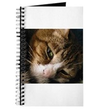 Unique Cats curled up Journal