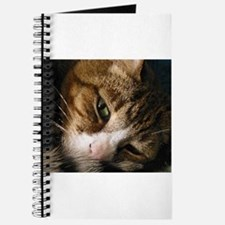 Funny Cats curled up Journal
