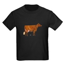 Shorthorn Cow T