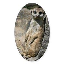 Meerkat005 Decal