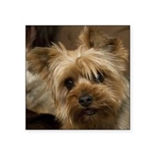 "Yorkie Puppy Square Sticker 3"" x 3"""