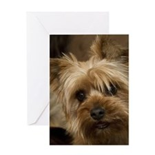 Yorkie Puppy Greeting Card