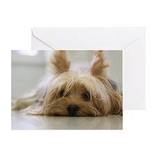 Yorkie Dog Greeting Card
