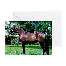 Mangalarga Marchador Horse Greeting Cards