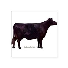 "Angus Beef Cow Square Sticker 3"" x 3"""