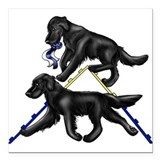 Flat coated retriever Square Car Magnets