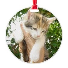 Cat Shelter Felix Ornament