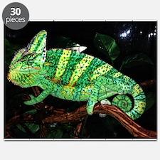 Veiled Yemen Chameleon Puzzle