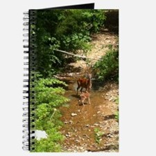 Wildlife Journal