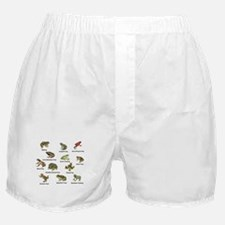 Frog and Toad Types Boxer Shorts