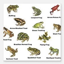 """Frog and Toad Types Square Car Magnet 3"""" x 3"""""""