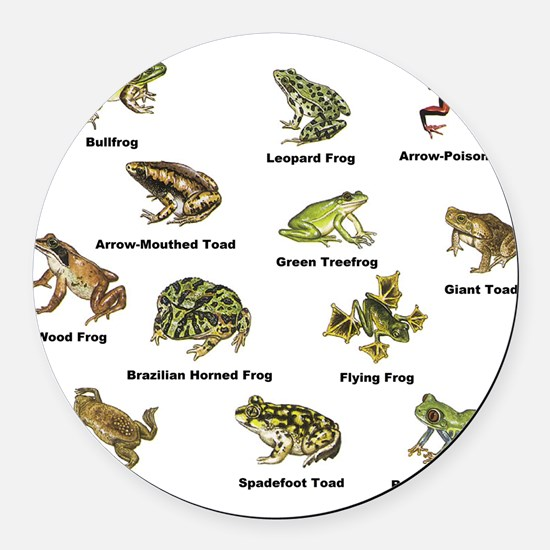 Frog and Toad Types Round Car Magnet