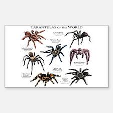 Tarantulas of the World Decal