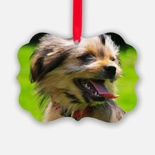 Yorkshire-Mix Puppy in light Brow Ornament