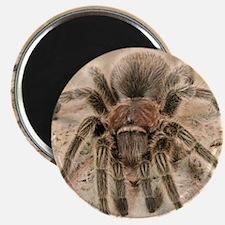 Rosehair Tarantula Magnet