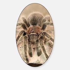 Rosehair Tarantula Decal