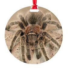 Rosehair Tarantula Ornament