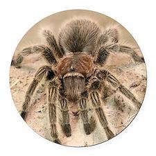 Rosehair Tarantula Round Car Magnet
