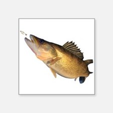 Walleye feeding Sticker