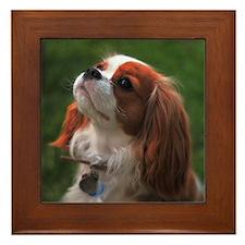 Cavalier Spaniel Framed Tile