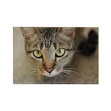 Sweet Cat Rectangle Magnet